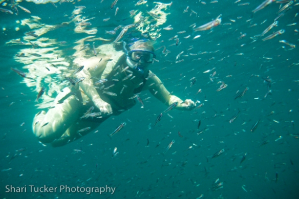 Shari snorkeling in the Galapagos Islands
